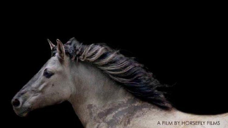Award-winning documentary film screening – TARPAN: Repainting An Ancient Picture